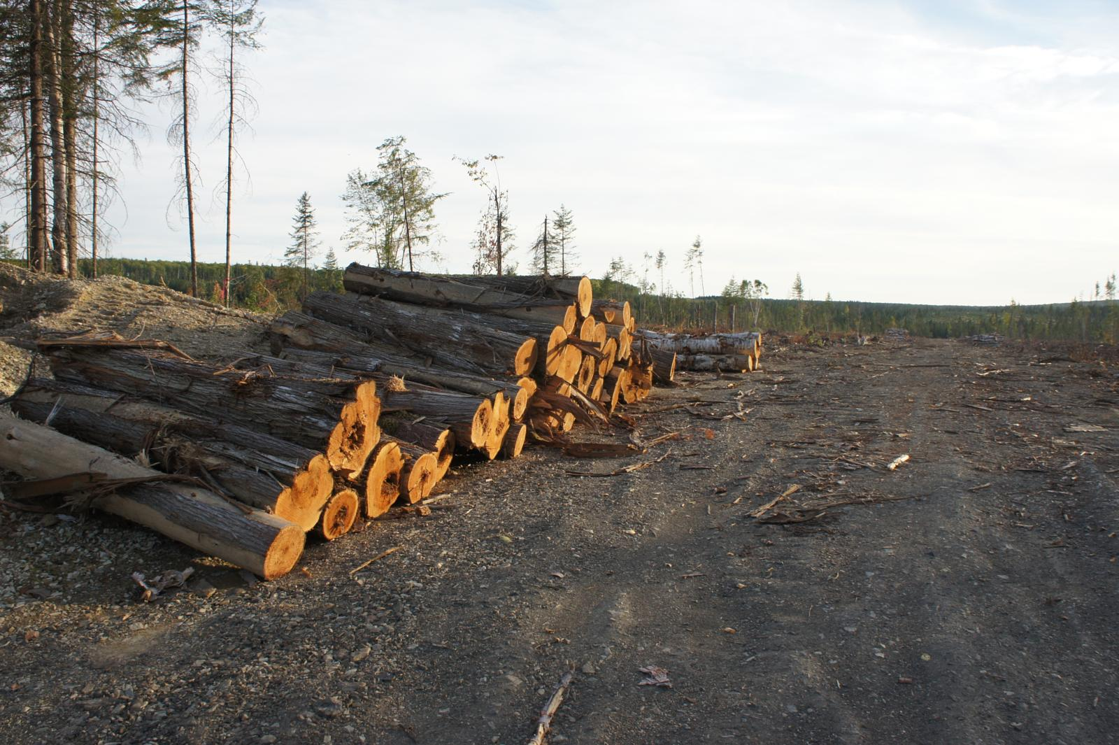 Foto de The Great New Brunswick Clearcut and Herbicide Spray Site Trail: Route 180, Whole Tree Removal Clearcut, 2018.