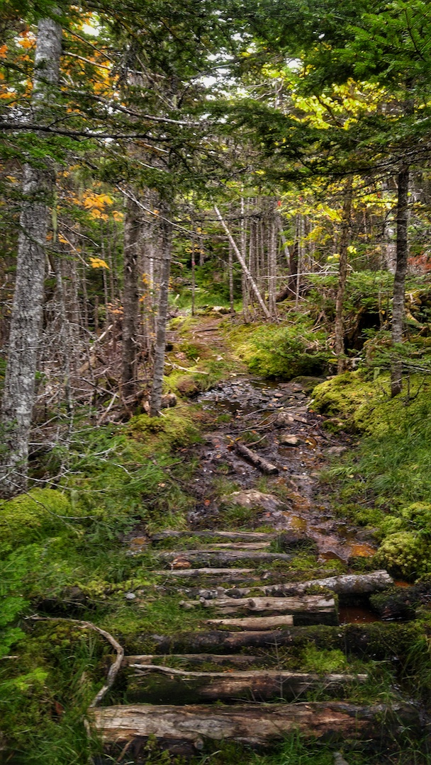 Фото Side Trail to Topsail Bluff