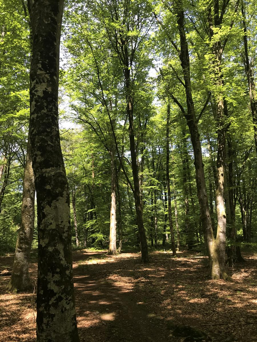 Фото Loop in Bois le Rois - France