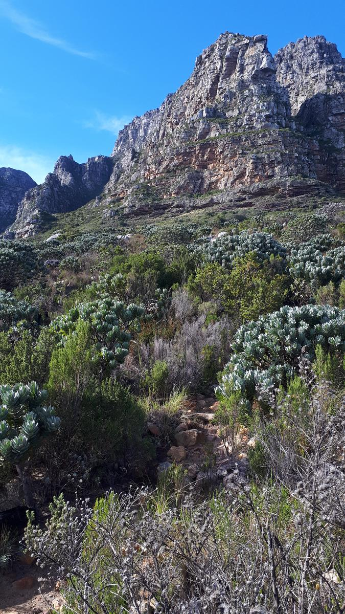 Foto di Blind gully go down via Kasteelspoort - Table Mountain Cape Town