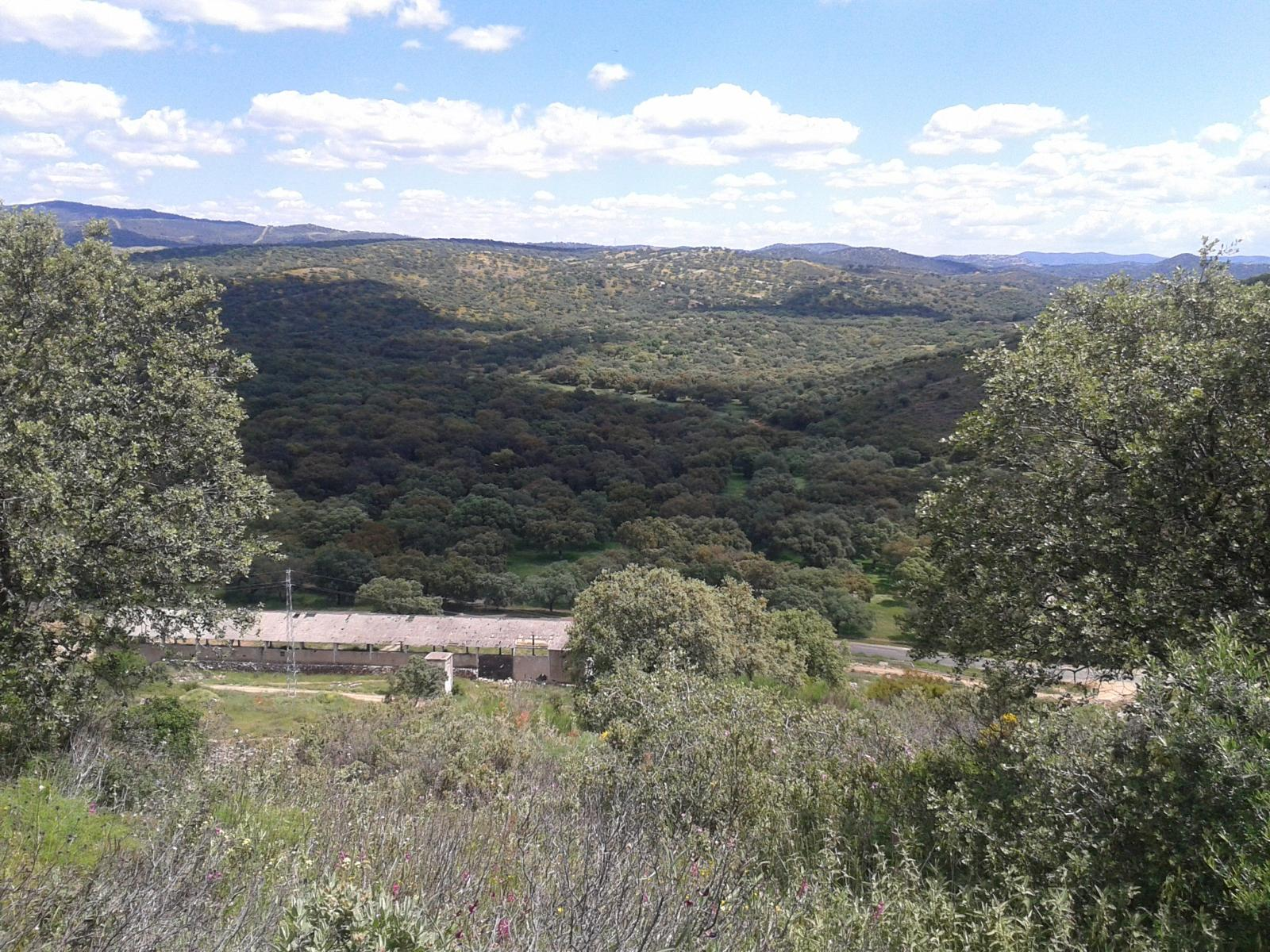 Photo of arroyo de Los Molinos y monte de los Covachos