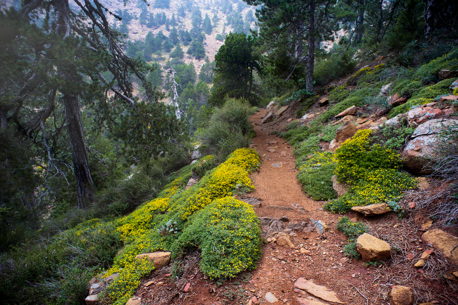 Φωτογραφίες Atalanti Nature Trail Troodos Limassol Cyprus