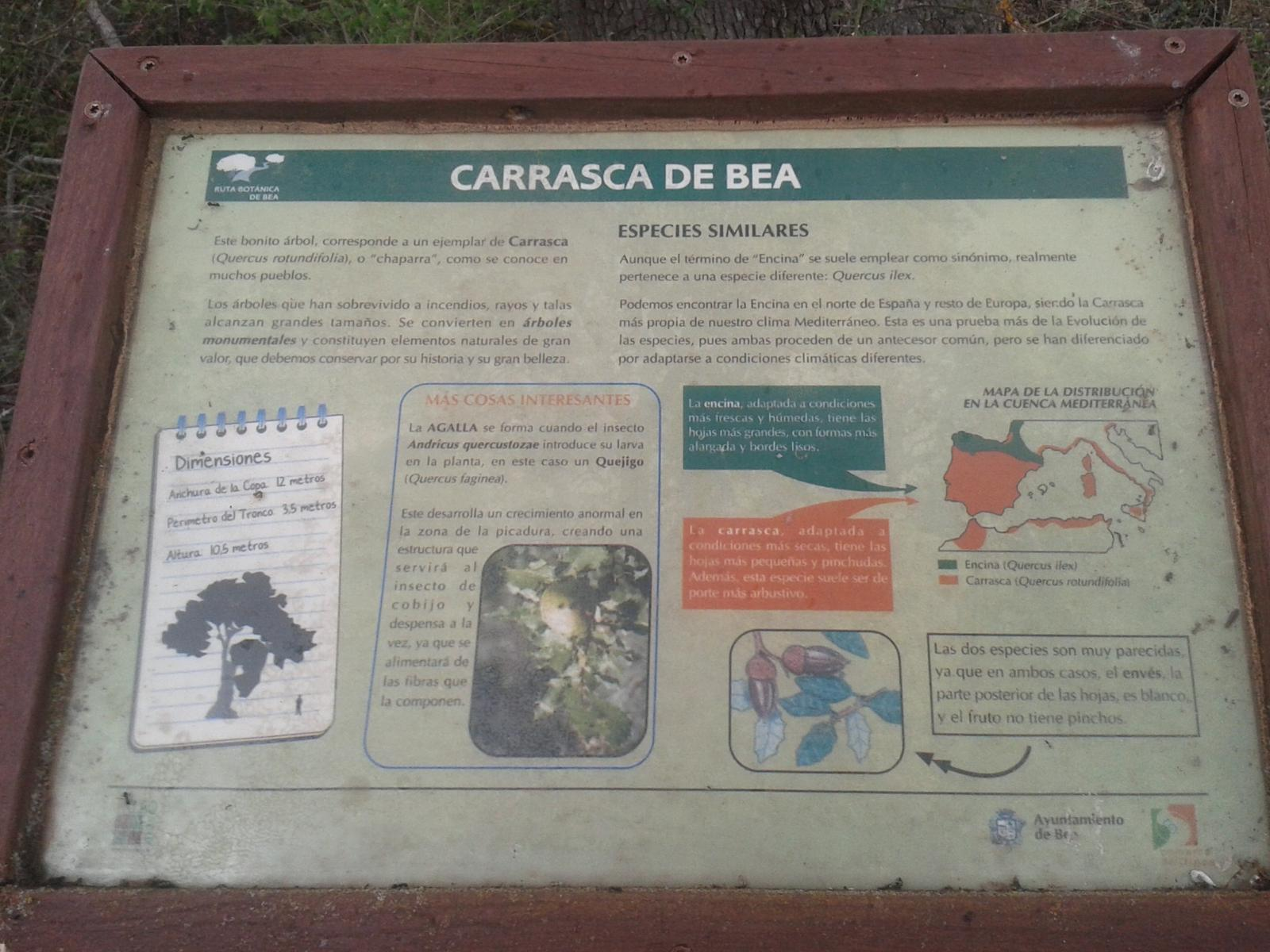 Photo de Ruta Botánica de Bea