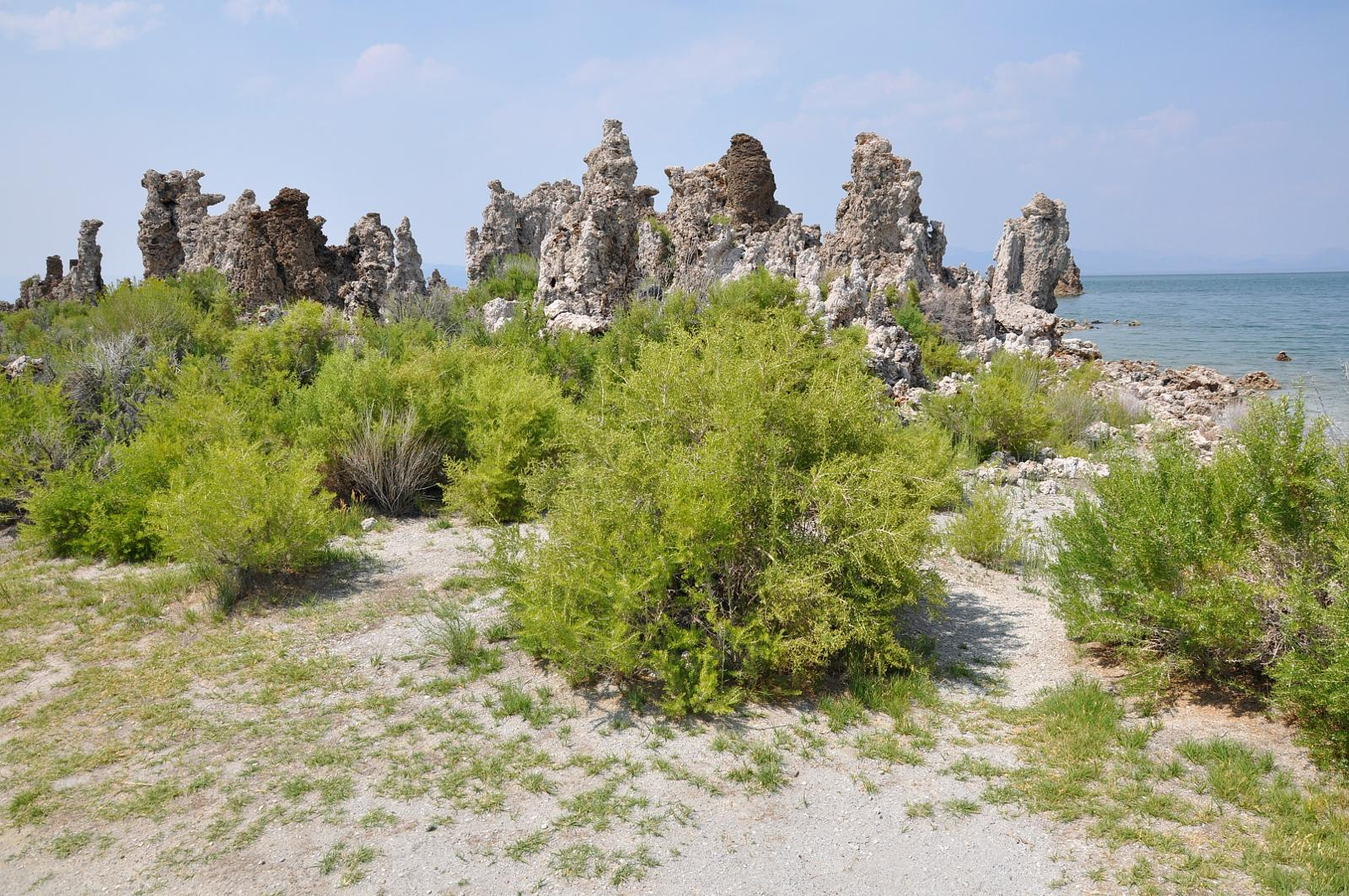 Foto di South tufa trail (mono lake). Mammoth lakes