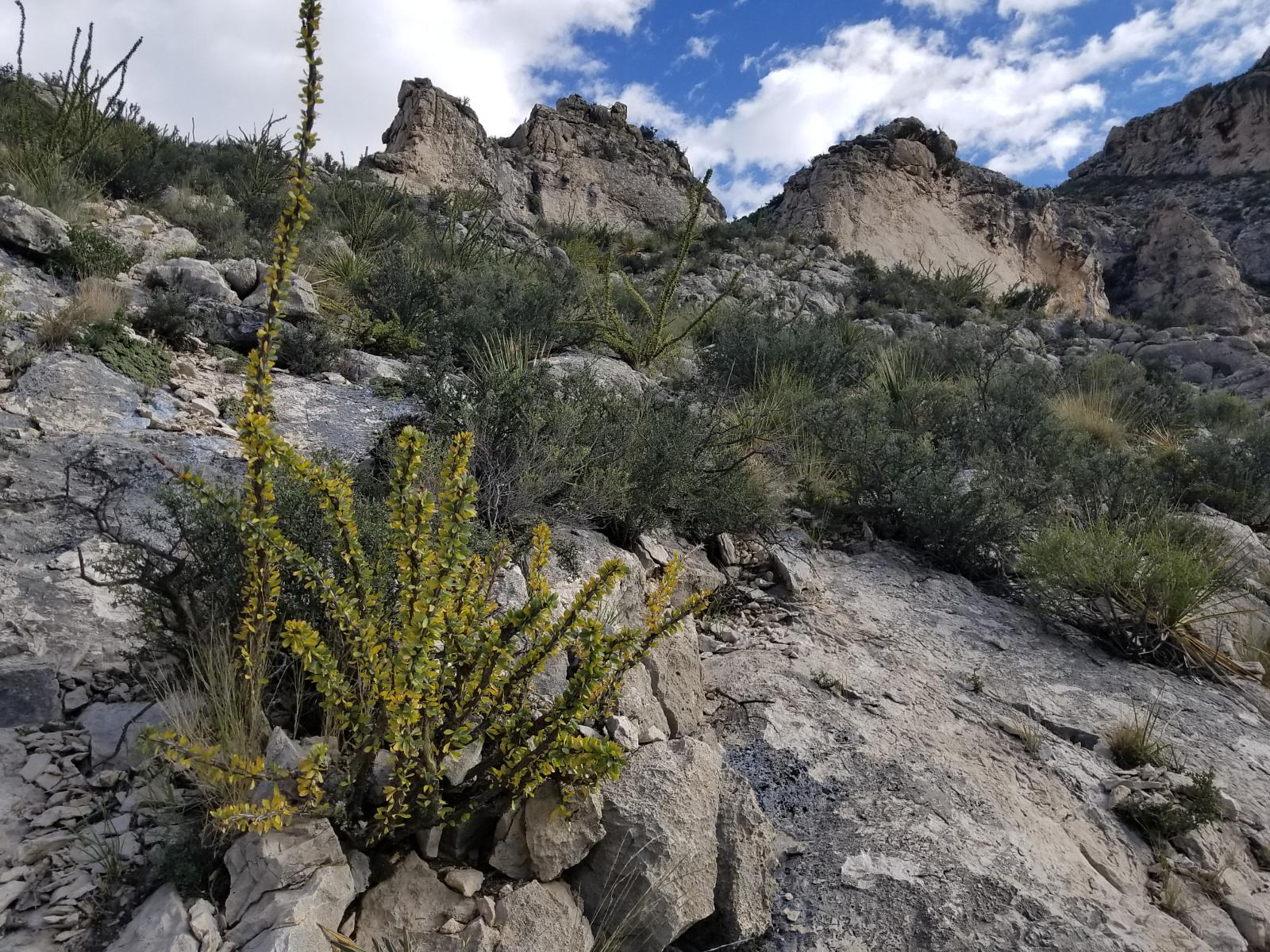 Zdjęcie The Bowl and Frijole Trail Guadalupe Mountains