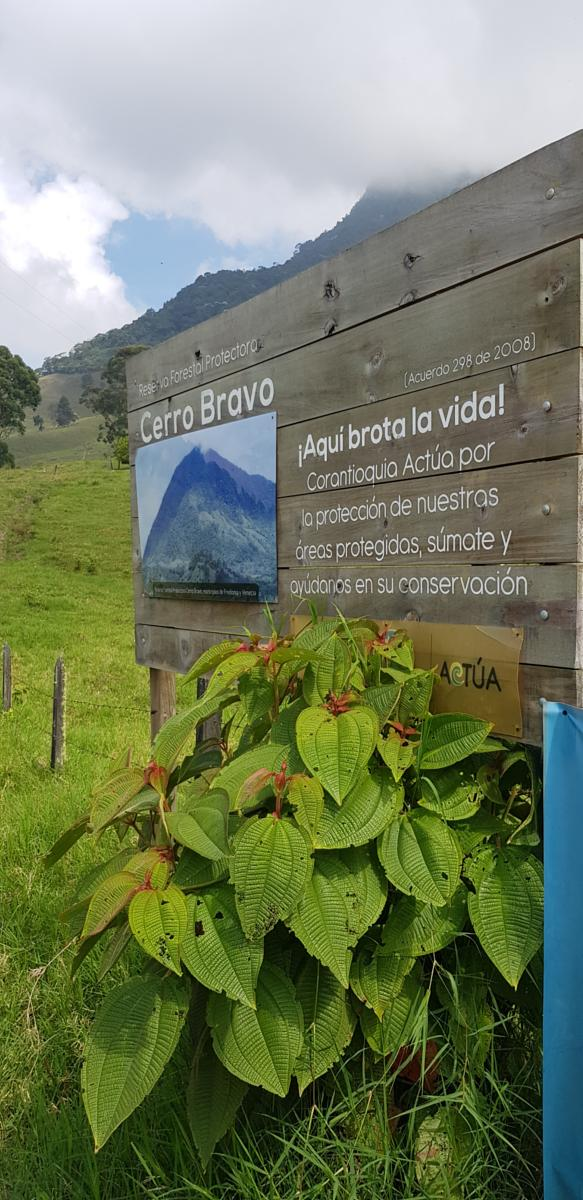 Photo of Cerro Bravo