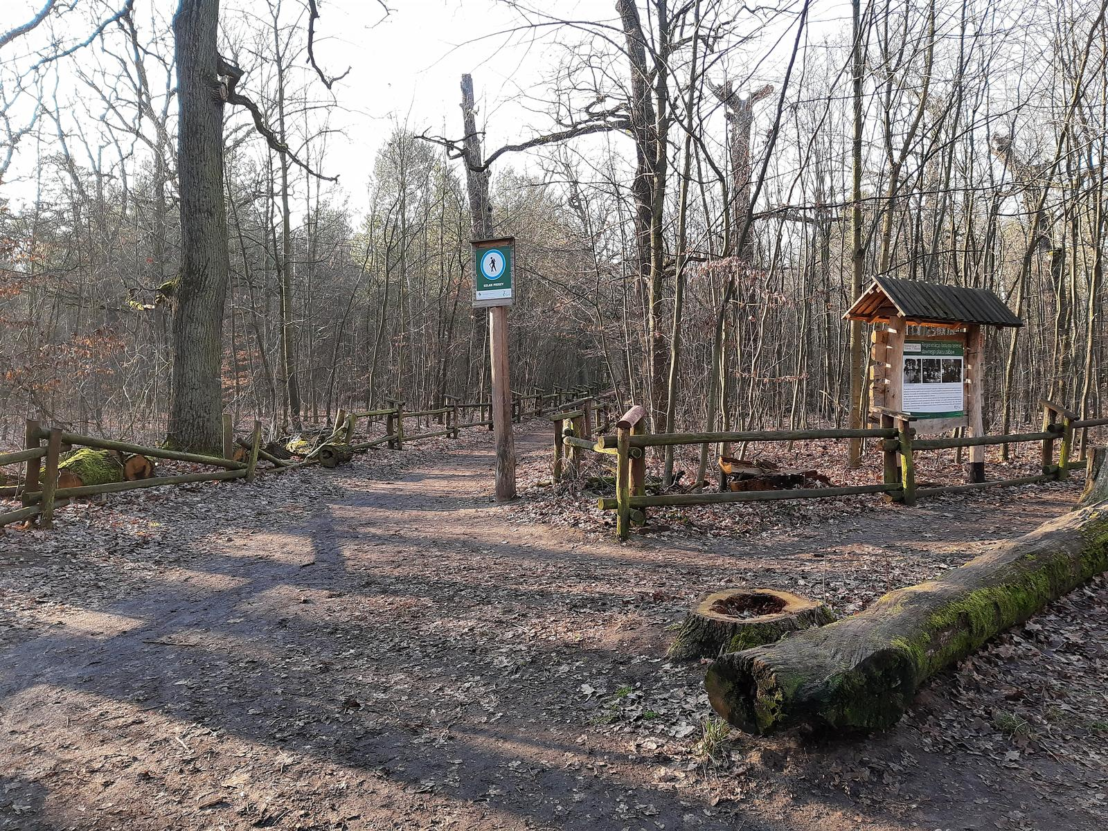 Photo of (PL) Bielany Forest – forest in the city centre (2)