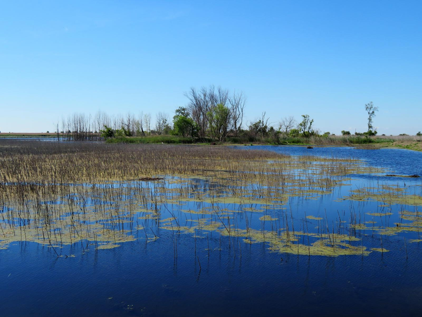 Photo of Pointe Mouillee State Game Park