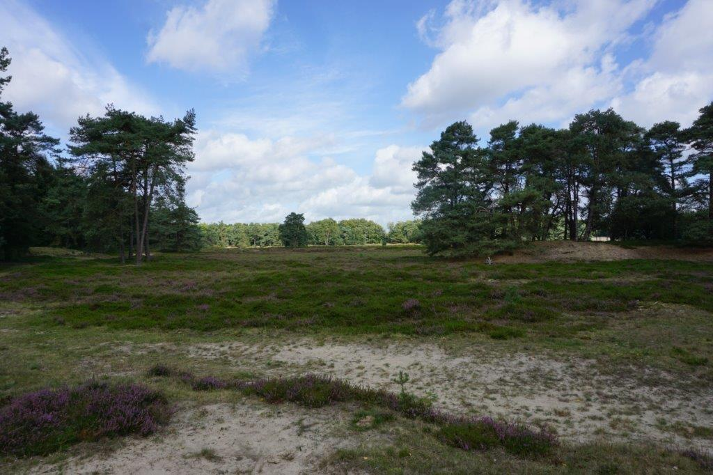 Foto di 2017-09-11 Diever: drents friese wold