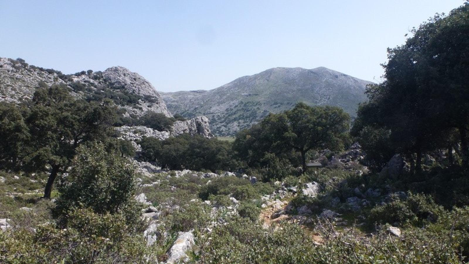 Photo of (Sierra de Grazalema) Llanos del Republicano, Puerto del Correo 1025m