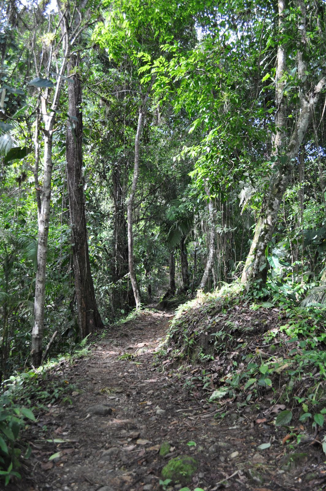 Photo of Camino a Ciudad Perdida