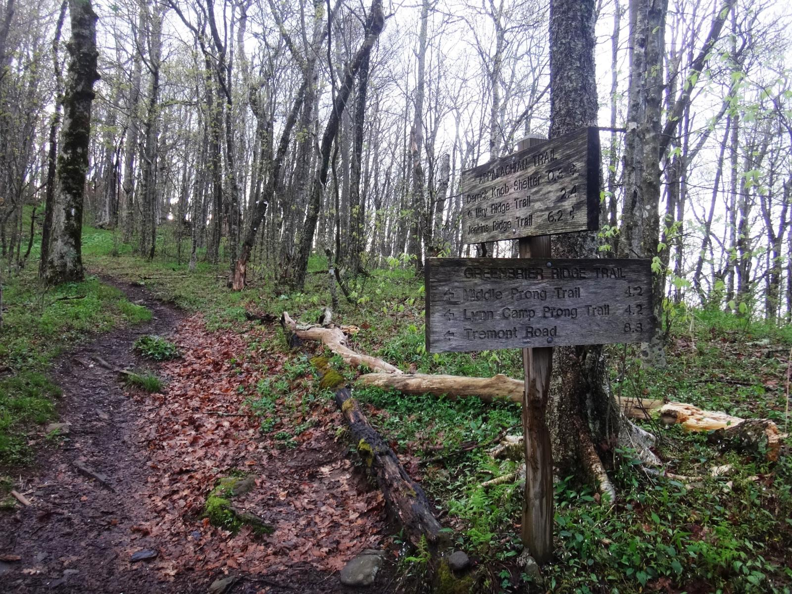 Foto von Sams Gap (4.840 pies). Intersección del AT con el Greenbrier Ridge Trail