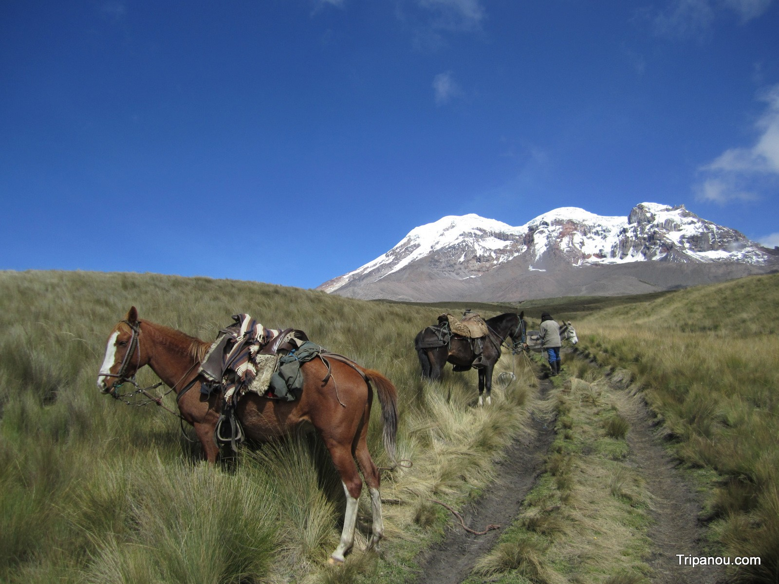 Photo de Les glaces du Chimborazo à cheval (con el hielero)