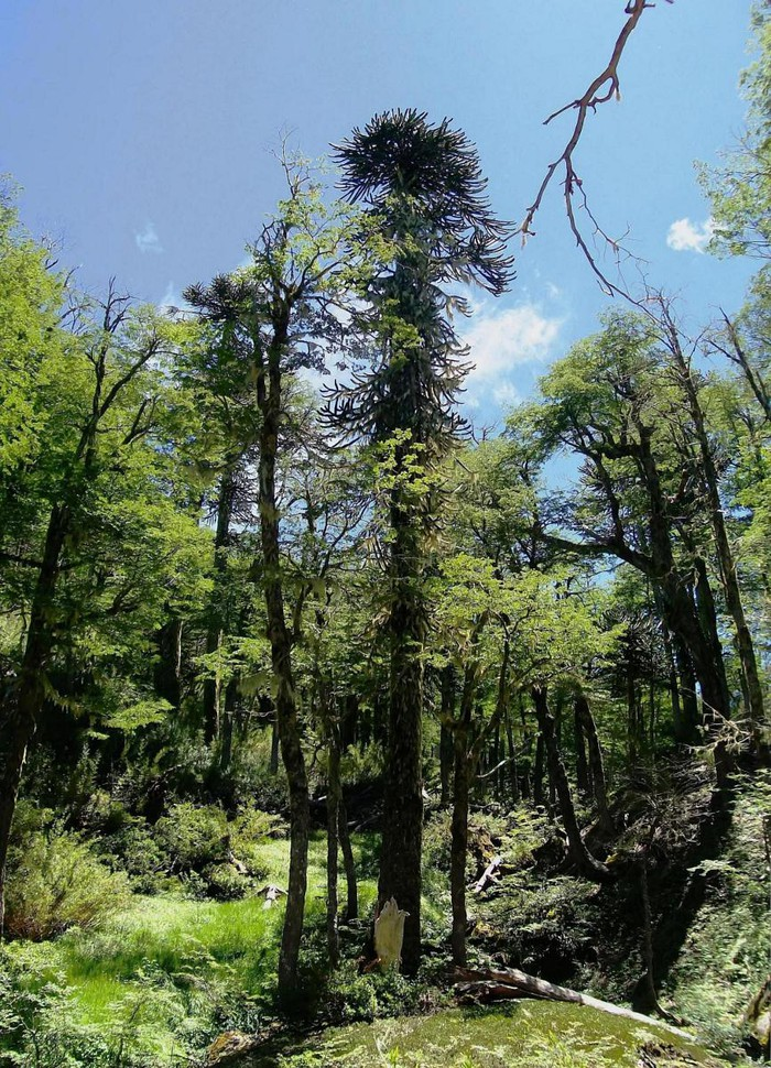 Photo of Trekking  'The Lakes' , Huerquehue National Park. Pucón-CHILE