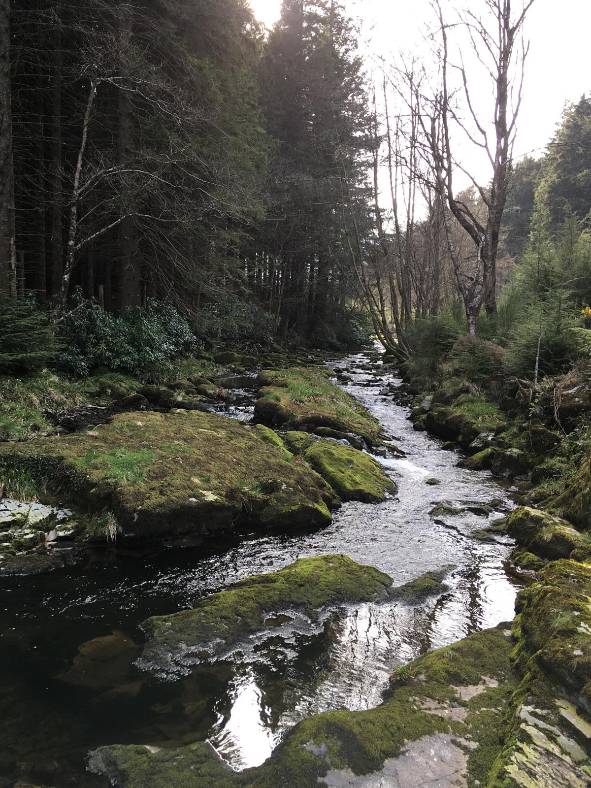 Photo of Tollymore forest