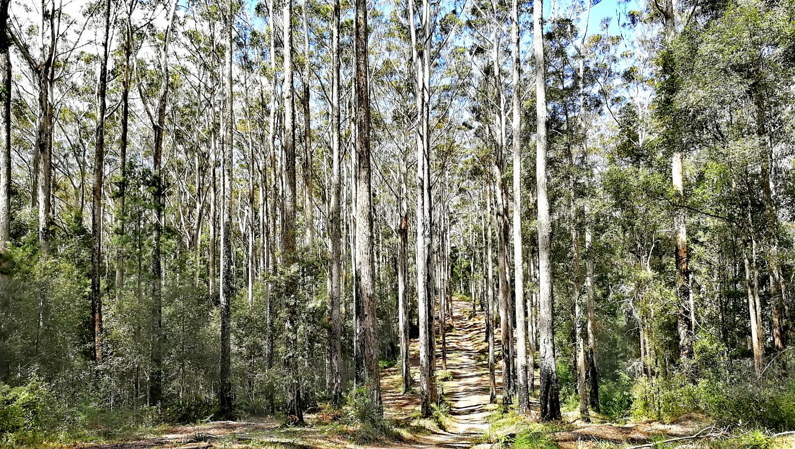Слика од Loop part of Sunshine Coast Hinterland Great Walk