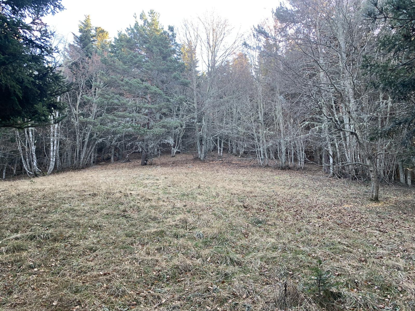 Photo of Lower meadow